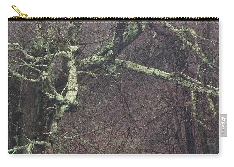 Photography Carry-all Pouch featuring the photograph Lichen by Steven Natanson