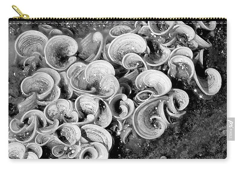 Mary Deal Carry-all Pouch featuring the photograph Life On The Rocks In Black And White by Mary Deal
