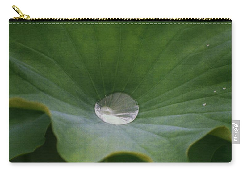 Plant Carry-all Pouch featuring the photograph Life by Richard Rizzo