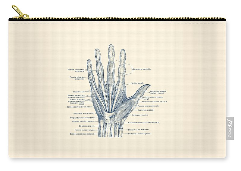 hand carry-all pouch featuring the drawing ligaments and bones - human hand  diagram -