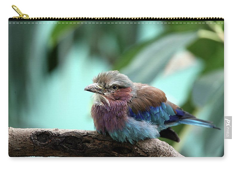 Bird Carry-all Pouch featuring the photograph Lilac Breasted Roller by Karol Livote
