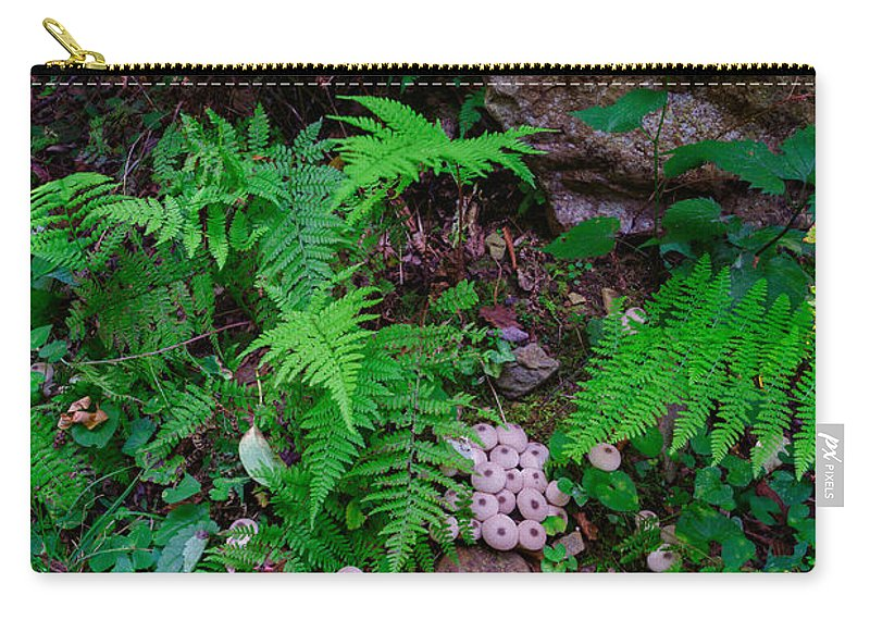 Shenandoah National Park Carry-all Pouch featuring the photograph Limberlost by Rick Berk