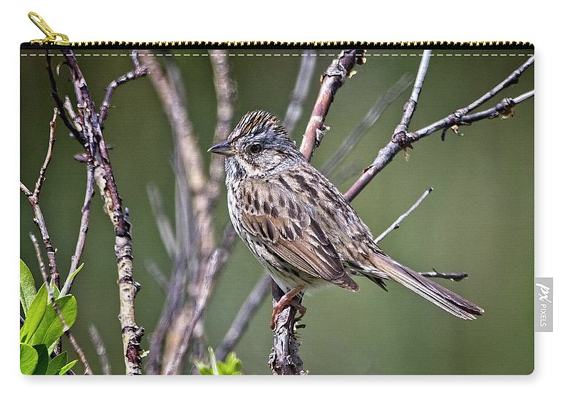 Bird Carry-all Pouch featuring the photograph Lincoln's Sparrow by Rick Graham