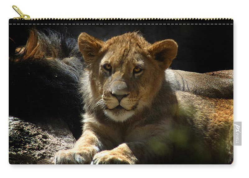Lions Carry-all Pouch featuring the photograph Lion Cub by Anthony Jones