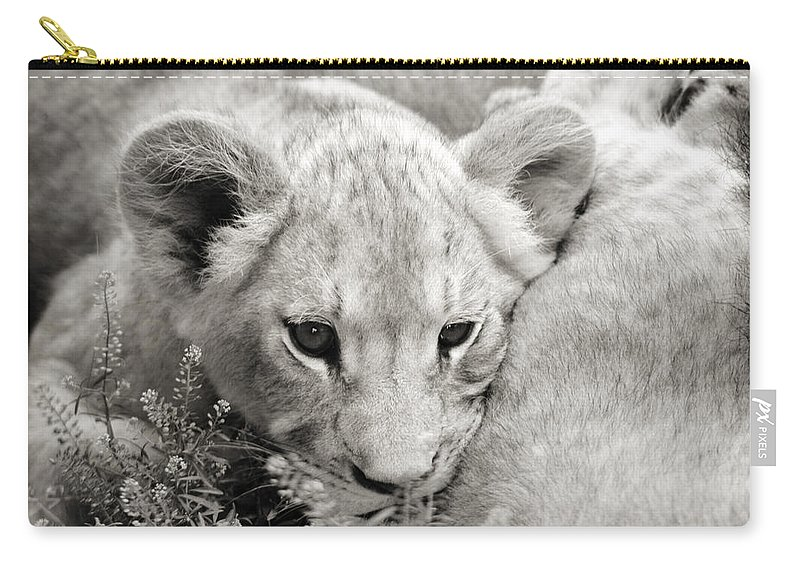 Lion Carry-all Pouch featuring the photograph Lion Cub by Marilyn Hunt