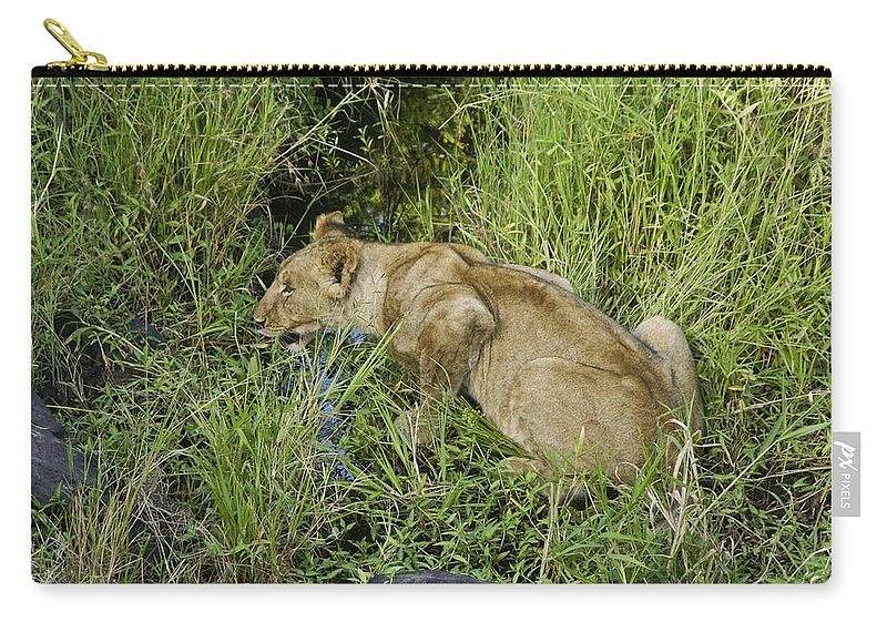 Africa Carry-all Pouch featuring the photograph Lion In A Cool Glade by Michele Burgess