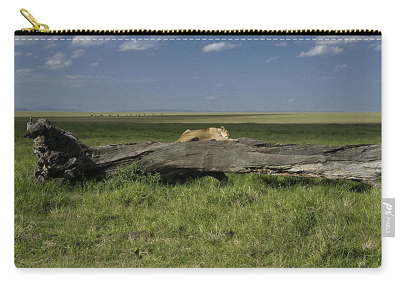 Africa Carry-all Pouch featuring the photograph Lion on a Log by Michele Burgess