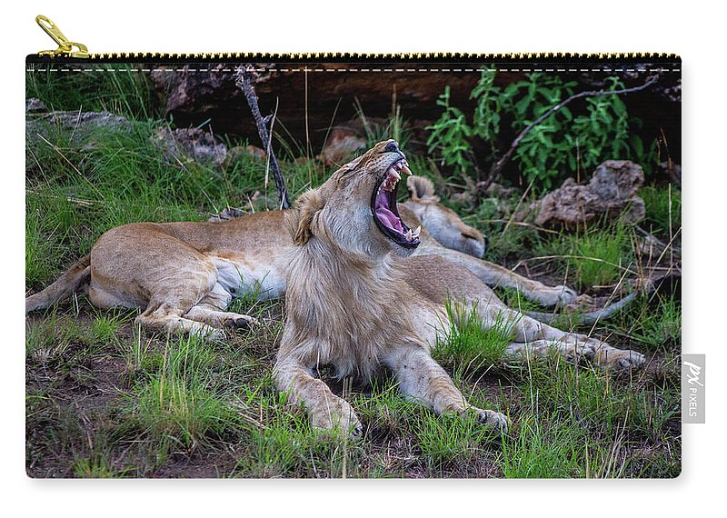 Lion Carry-all Pouch featuring the photograph Lion Roar/2 by Dr William Kane Olwit