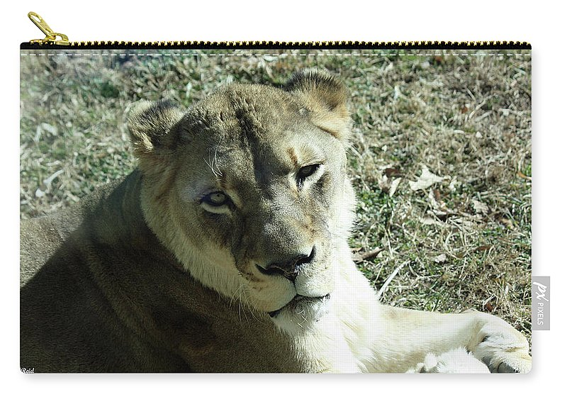 Maryland Carry-all Pouch featuring the photograph Lioness Peering by Ronald Reid