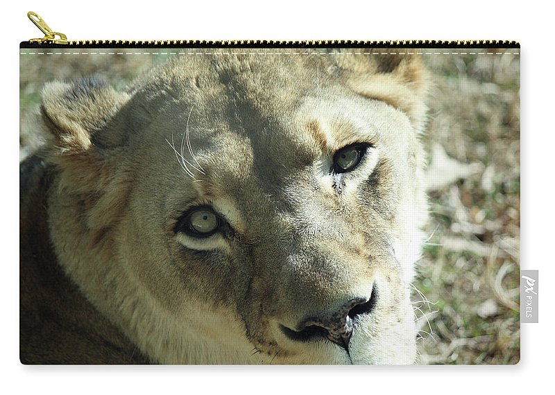 Maryland Carry-all Pouch featuring the photograph Lioness Up Close by Ronald Reid