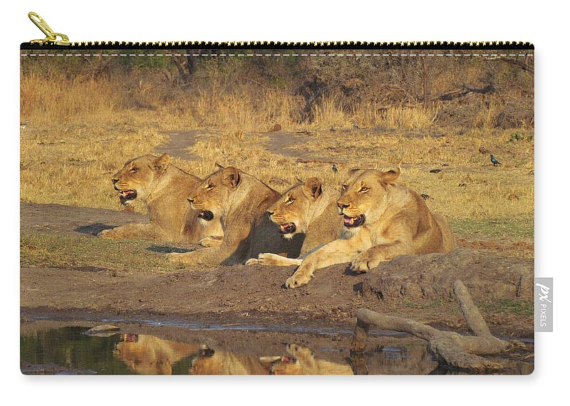 Adventure Carry-all Pouch featuring the photograph Lionesses by Robyn R Hazen