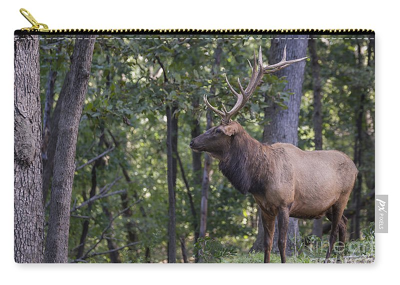 Animal Carry-all Pouch featuring the photograph Listening To His Bugle by Andrea Silies