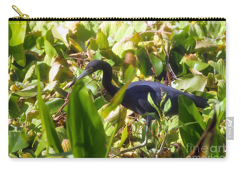 Little Blue Heron Carry-all Pouch featuring the photograph Little Blue Heron by David Lee Thompson