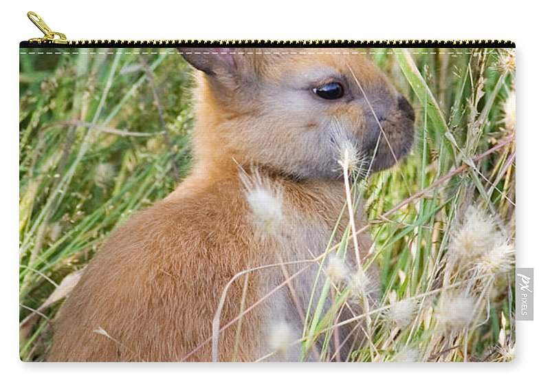 Rabbit Carry-all Pouch featuring the photograph Little Bunny by Randall Ingalls