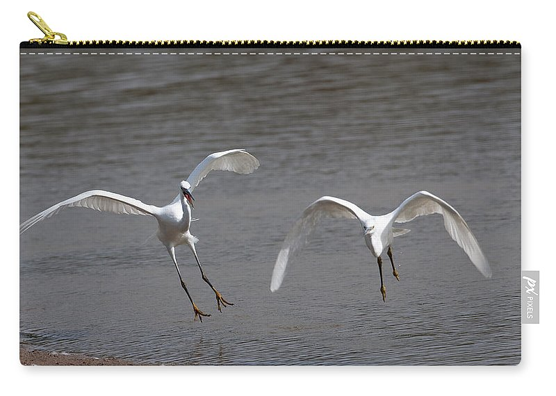 Egret Carry-all Pouch featuring the photograph Little Egrets In Flight by Bob Kemp