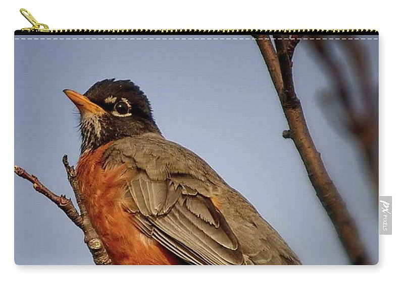 Robin Carry-all Pouch featuring the photograph Little Robin by Gaby Swanson