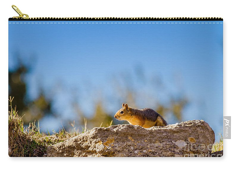 Nature Carry-all Pouch featuring the photograph Little Squirrel by Mirko Chianucci