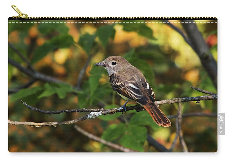 Bird Carry-all Pouch featuring the photograph Little Tweet by Jayne Gohr