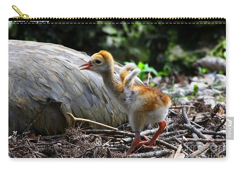 Sandhill Crane Carry-all Pouch featuring the photograph Little Wings by Barbara Bowen