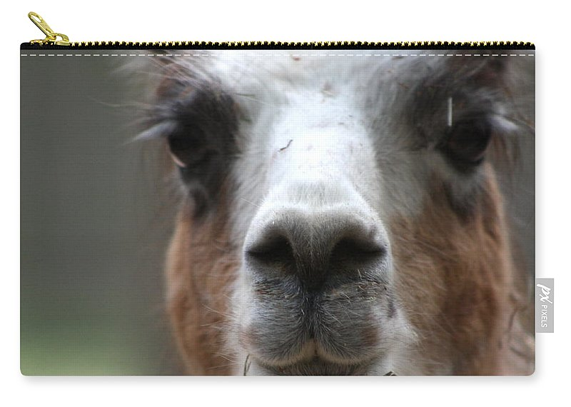 Carry-all Pouch featuring the photograph Llama by Teresa Doran