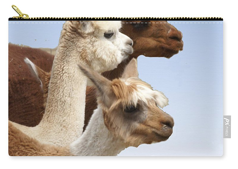 Llama Carry-all Pouch featuring the photograph Llama's Three by Heather Coen