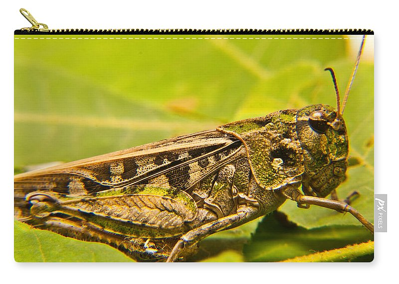 Locust Carry-all Pouch featuring the photograph Locust In Green by Douglas Barnett