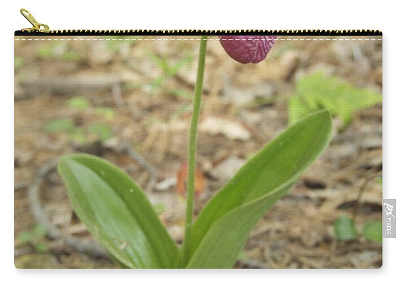 Wildflower Carry-all Pouch featuring the photograph Lone Lady Slipper by Michael Peychich
