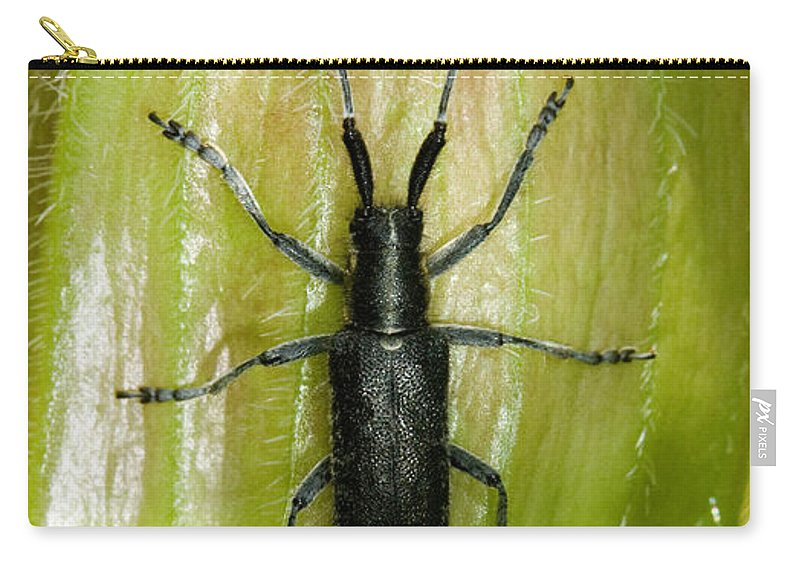 Longhorn Beetle Carry-all Pouch featuring the photograph Longhorn Beetle by Bob Kemp