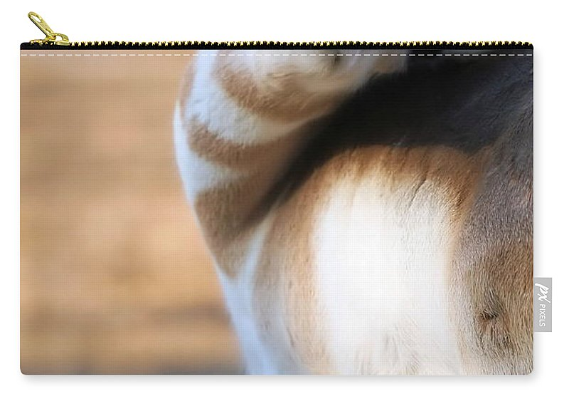 Pronghorn Carry-all Pouch featuring the photograph Looking Back by Karol Livote