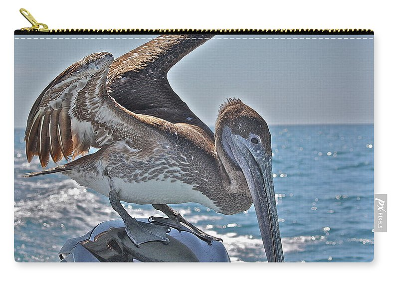 Pelican Carry-all Pouch featuring the photograph Looking For Leftovers by Diana Hatcher
