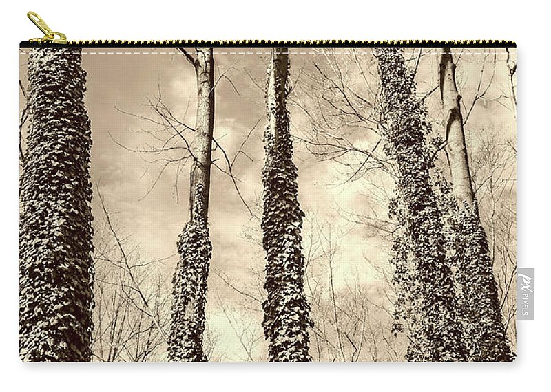Trees Carry-all Pouch featuring the photograph Looking Up by Margaret Koc