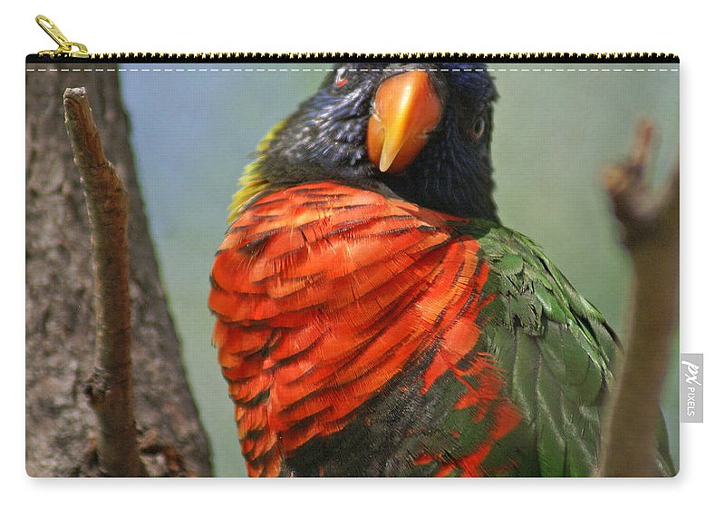 Bird Carry-all Pouch featuring the photograph Lorikeet by Heather Coen