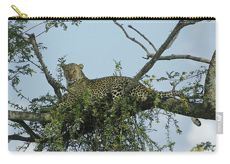 Africa Carry-all Pouch featuring the photograph Lounging Leopard by Michele Burgess