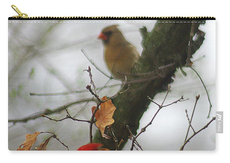 Jenny Gandert Carry-all Pouch featuring the photograph Love At First Sight by Jenny Gandert