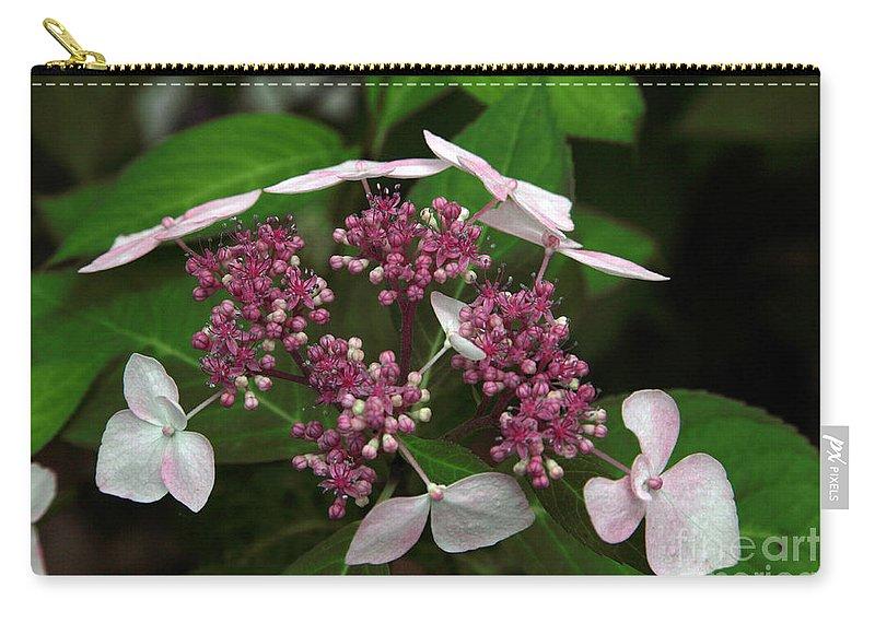 Hydrangea Carry-all Pouch featuring the photograph Lovely by Amanda Barcon