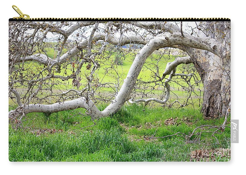 Landscape Carry-all Pouch featuring the photograph Low Branches On Sycamore Tree by Carol Groenen