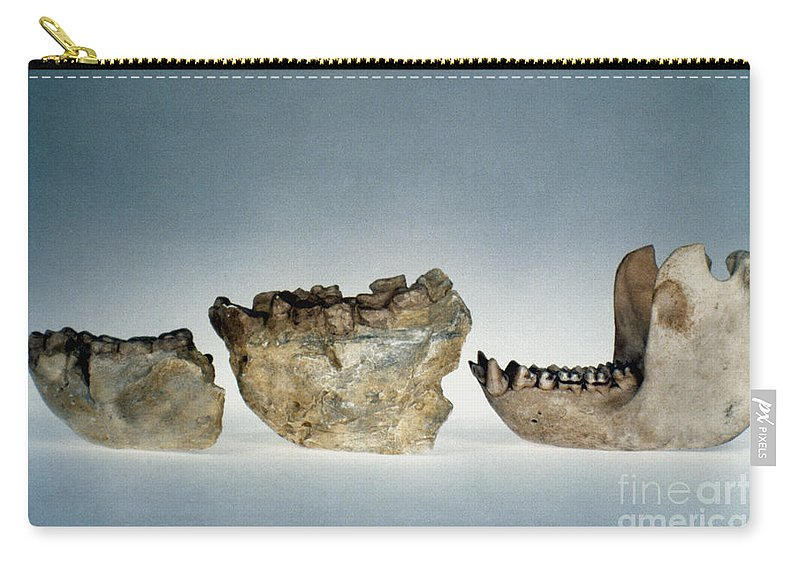 Ape Carry-all Pouch featuring the photograph Lower Jawbones by Granger