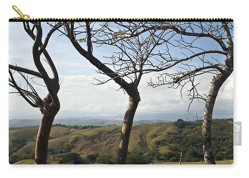 Trees Carry-all Pouch featuring the photograph Lush Land Leafless Trees Iv by Madeline Ellis