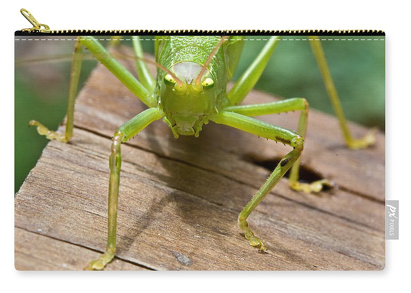 Longhorned Carry-all Pouch featuring the photograph Mad by Douglas Barnett