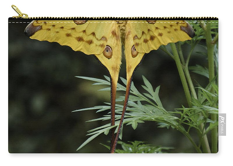 Madagascar Carry-all Pouch featuring the photograph Madagascar Comet Moth by Michele Burgess