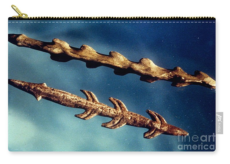 Ancient Carry-all Pouch featuring the photograph Magdalenian Harpoons by Granger