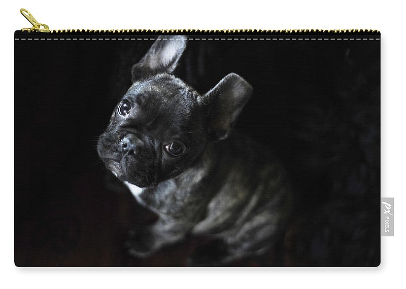 Dog Carry-all Pouch featuring the photograph Magoo IIi by Rafa Rivas