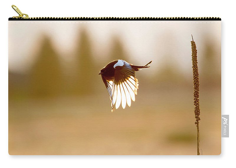 Magpie Carry-all Pouch featuring the photograph Magpie Wings Of Light by Judi Dressler
