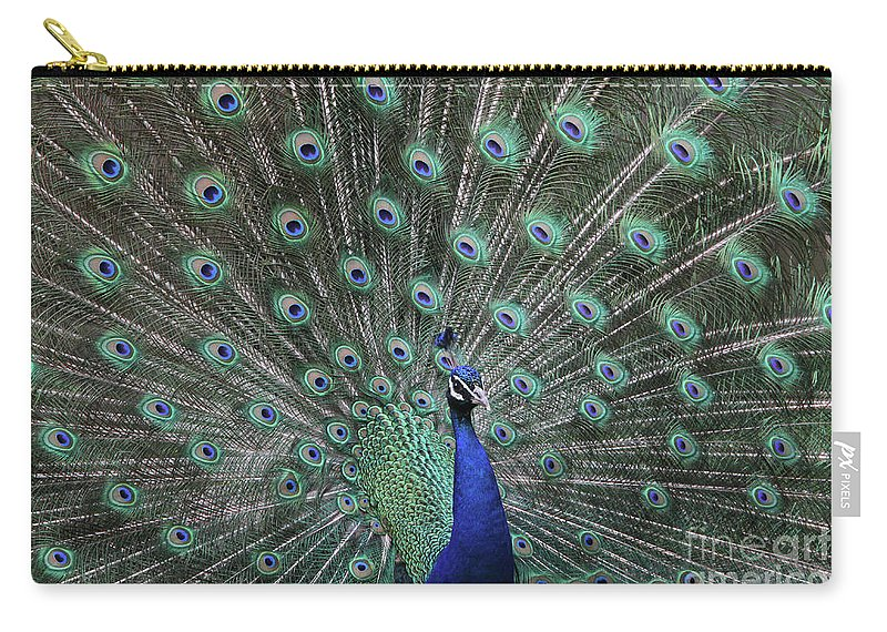 Peacock Carry-all Pouch featuring the photograph Main Attraction #2 by Judy Whitton