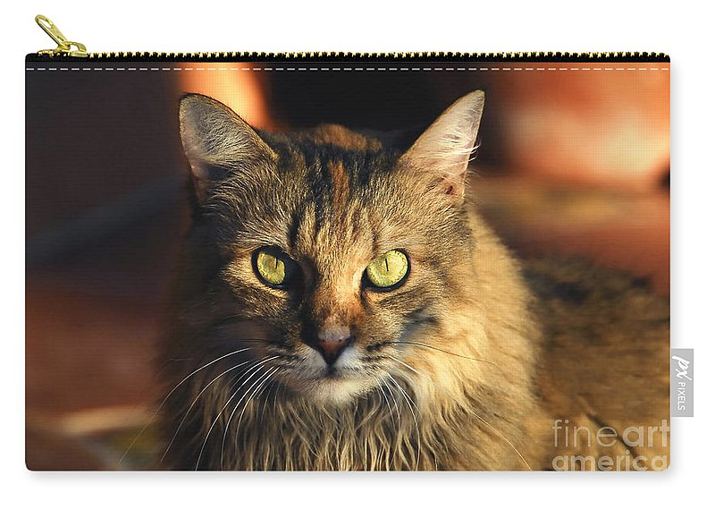 Main Coone Carry-all Pouch featuring the photograph Main Coone by David Lee Thompson
