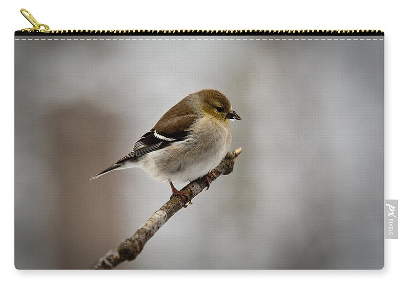 Male Carry-all Pouch featuring the photograph Male American Golden Finch by Douglas Barnett