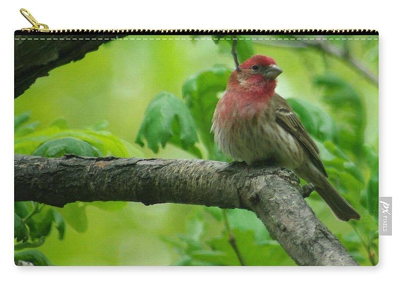 Jenny Gandert Carry-all Pouch featuring the photograph Male House Finch by Jenny Gandert