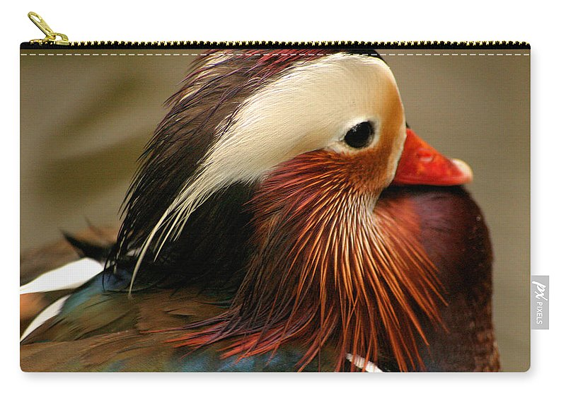Mandarin Duck Carry-all Pouch featuring the photograph Male Mandarin Duck China by Ralph A Ledergerber-Photography