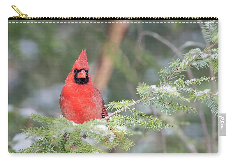 Cardinal Carry-all Pouch featuring the photograph Male Northern Cardinal 2 by John Radosevich