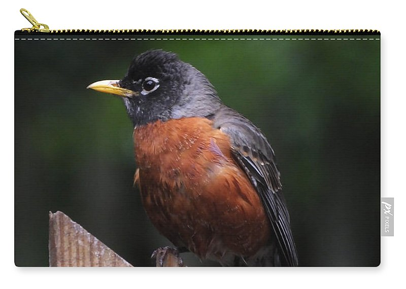 Robin Carry-all Pouch featuring the photograph Male Robin by Lizi Beard-Ward
